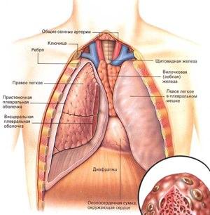 Очищение организма после курения