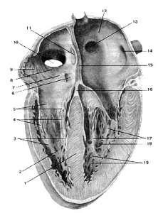 Отказ от курения спасет ваше сердце