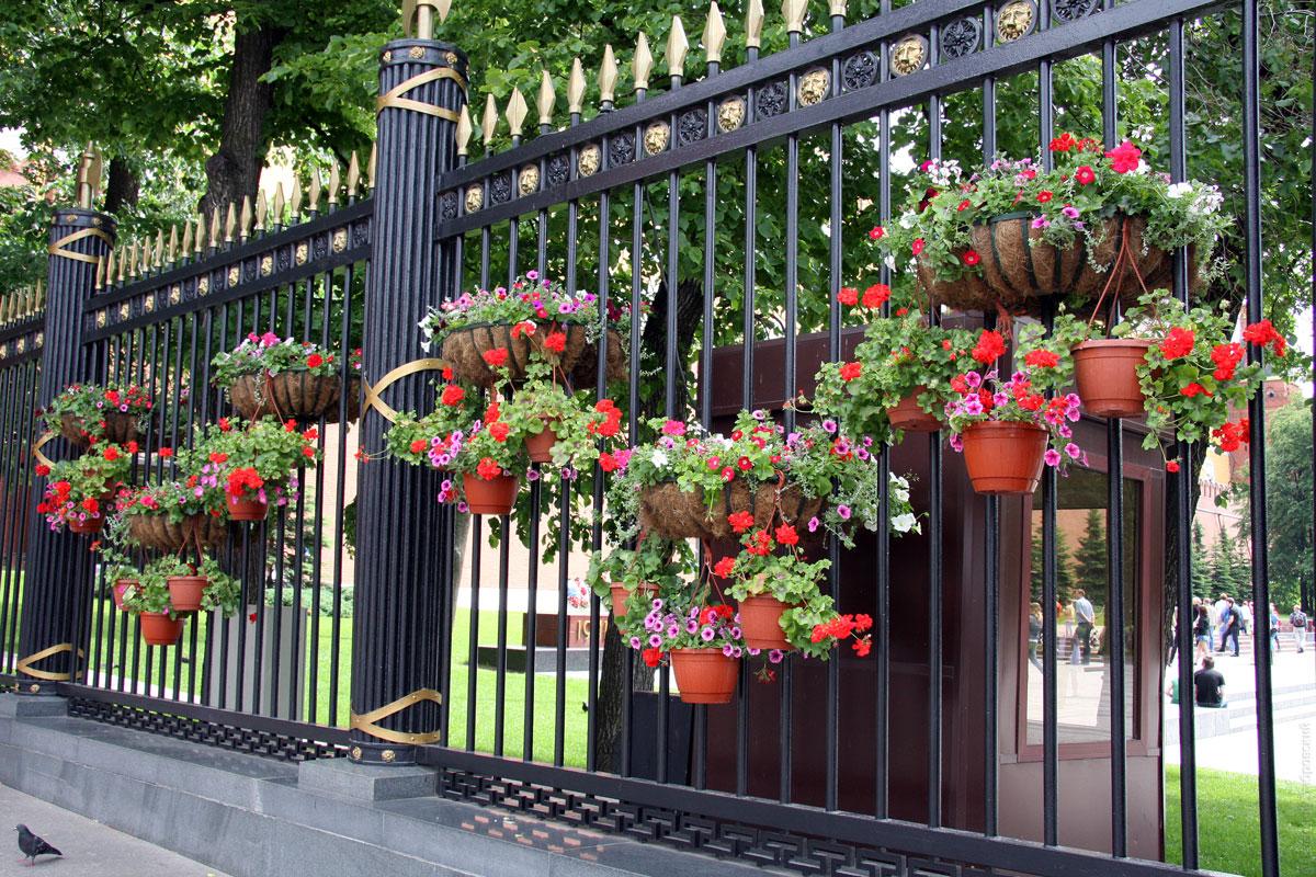 заборчики с цветами фото