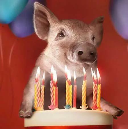 Днем, открытка с днем рождения со свинкой