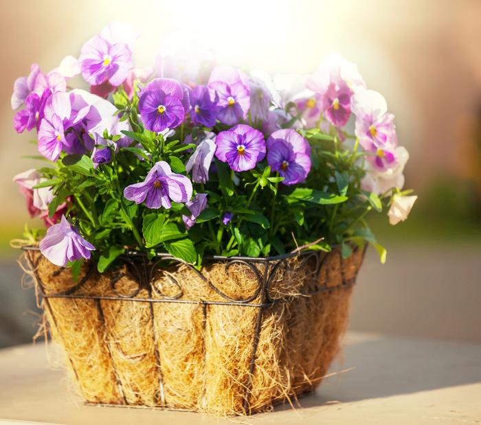 102018446_flowers_in_basket_24.jpg