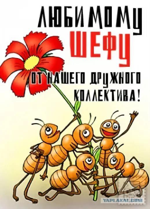 после картинка с муравьями поздравляем жизнь это