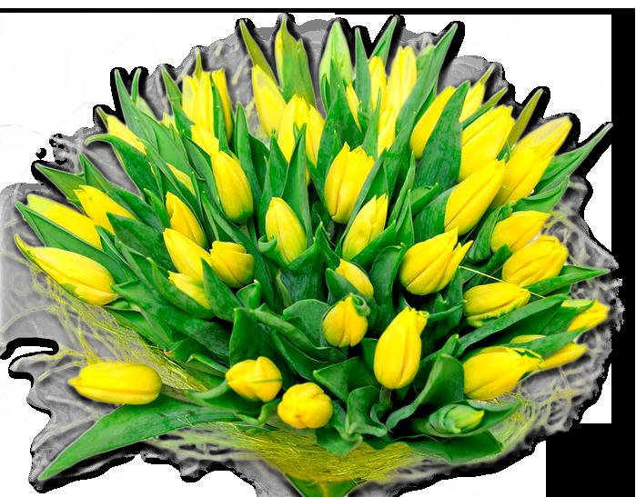 Пожелание к букет желтые тюльпаны фото, цветов