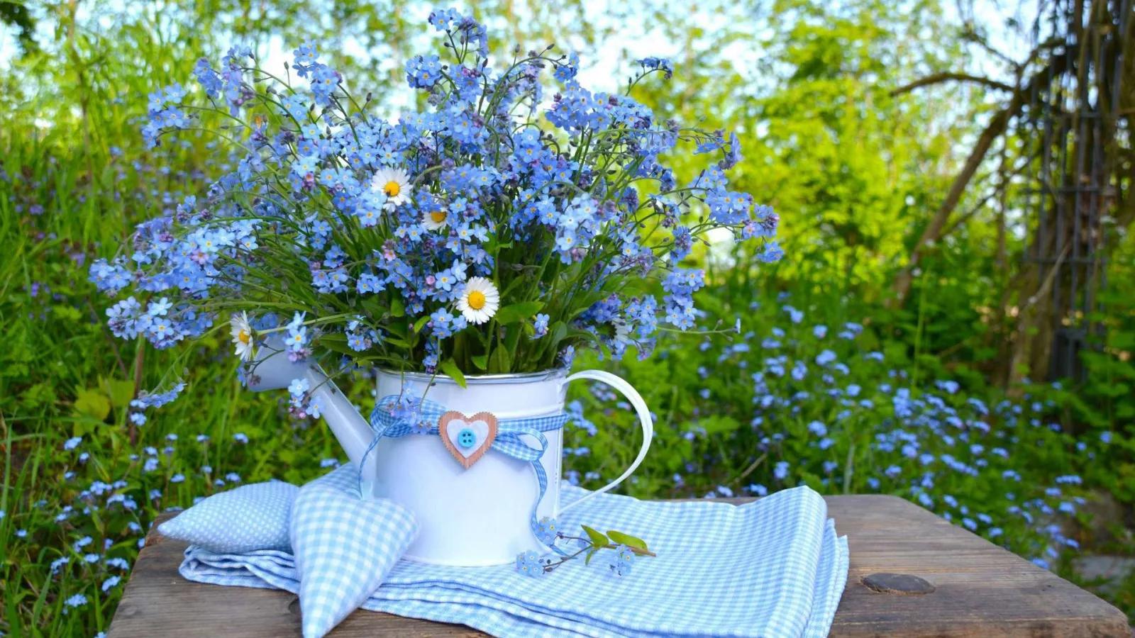 Полевые цветы фото с добрым утром