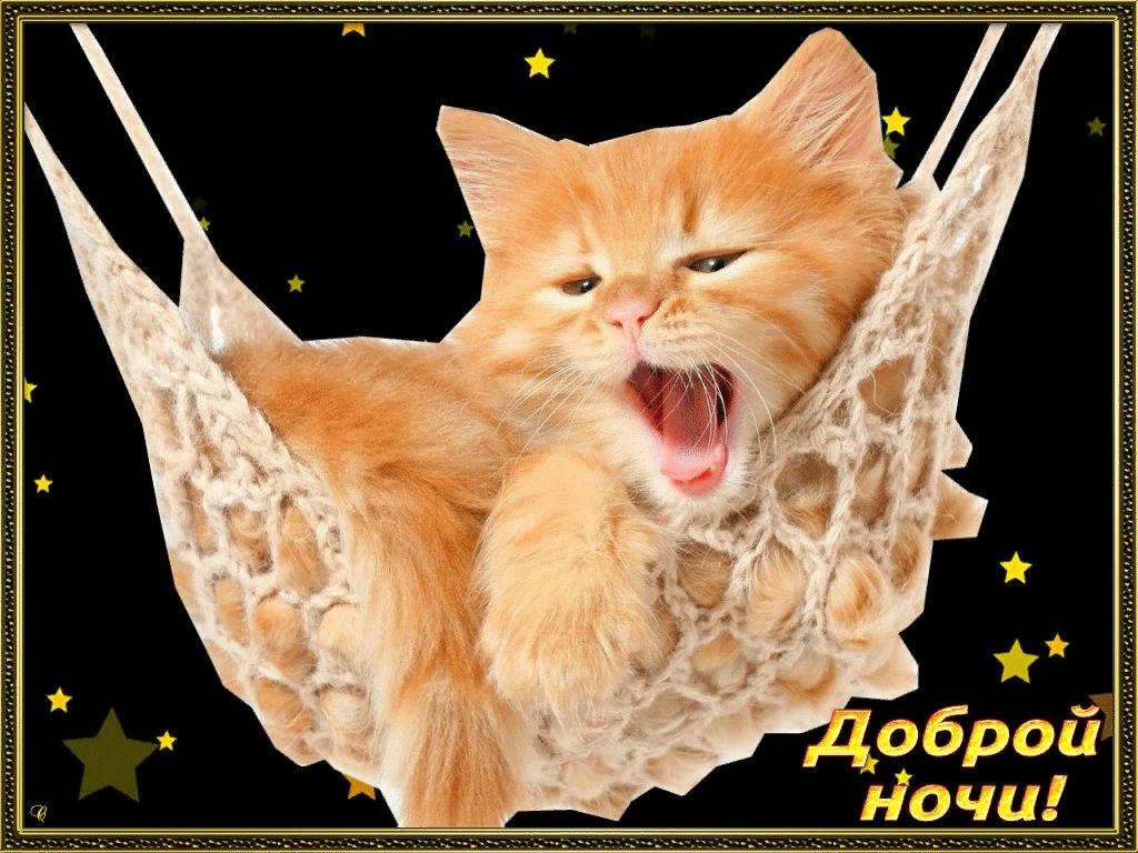 Открытки с рыжим котом с надписью спокойной ночи