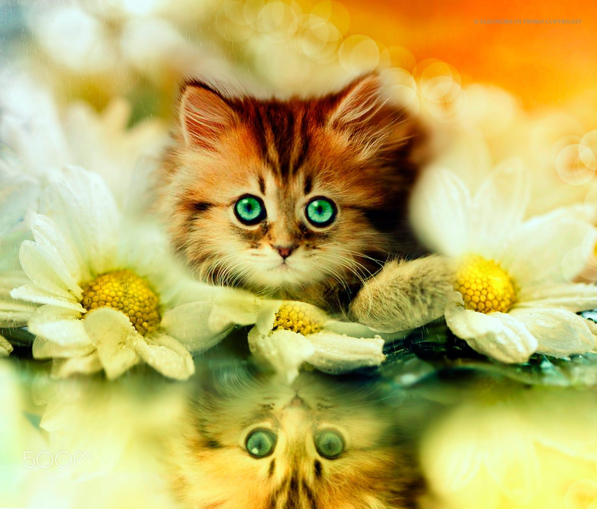кошки добрый день картинки благотворно влияет далеко