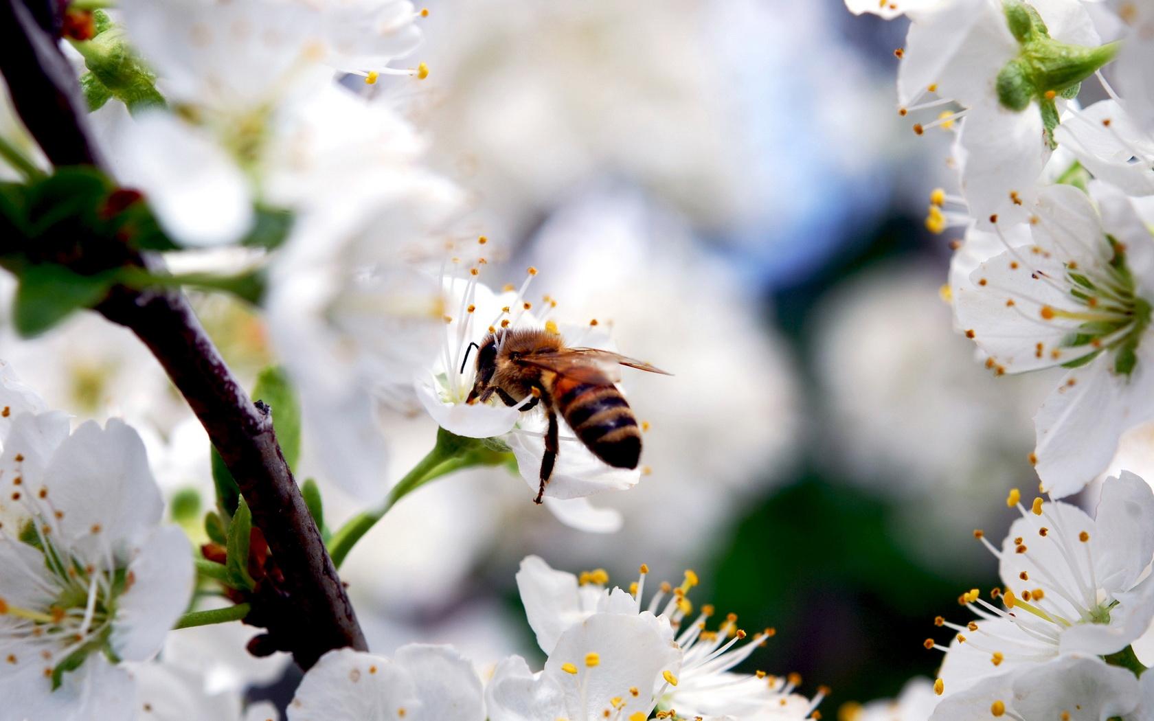 1680x1050-px-Bumblebee-1648267.jpg
