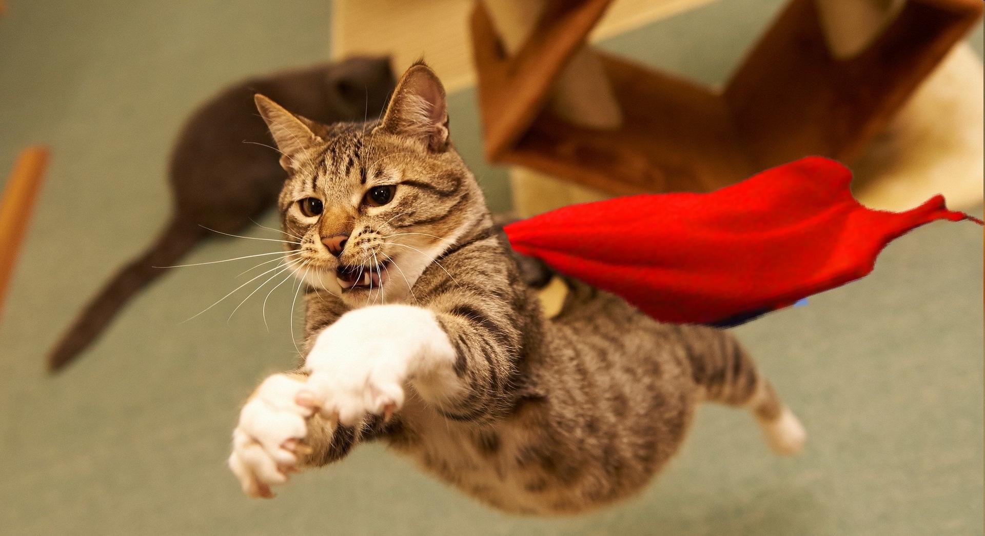 Поздравлением днем, смешные картинки и видео с котами