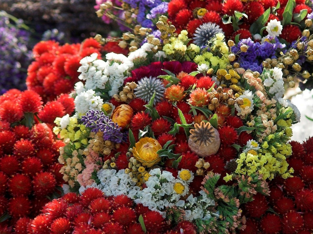 Натюрморт  фото цветов фотографии фруктов фото букета