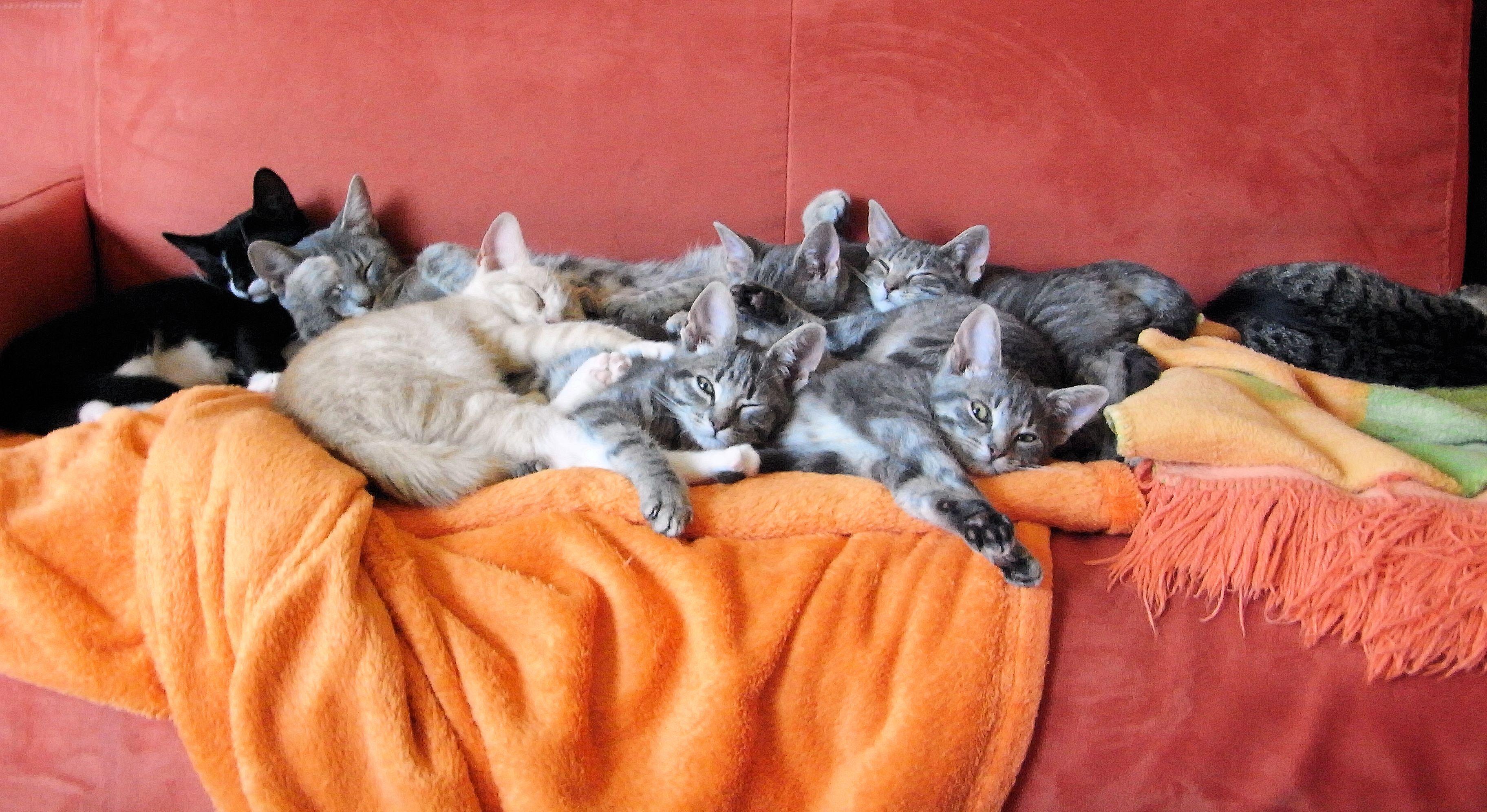 все картинки котенок спит на диване крепить