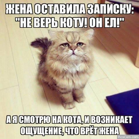картинка не верь коту его кормили вакансия продолжает