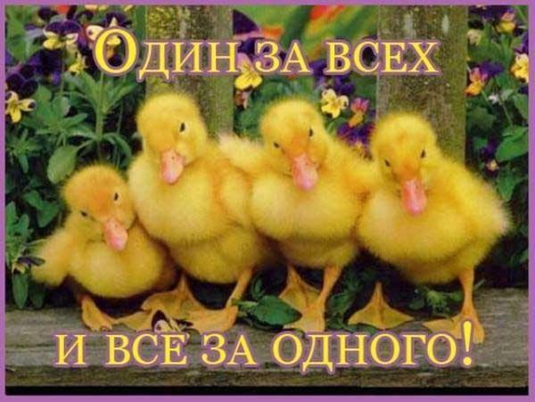 494534_original.jpg