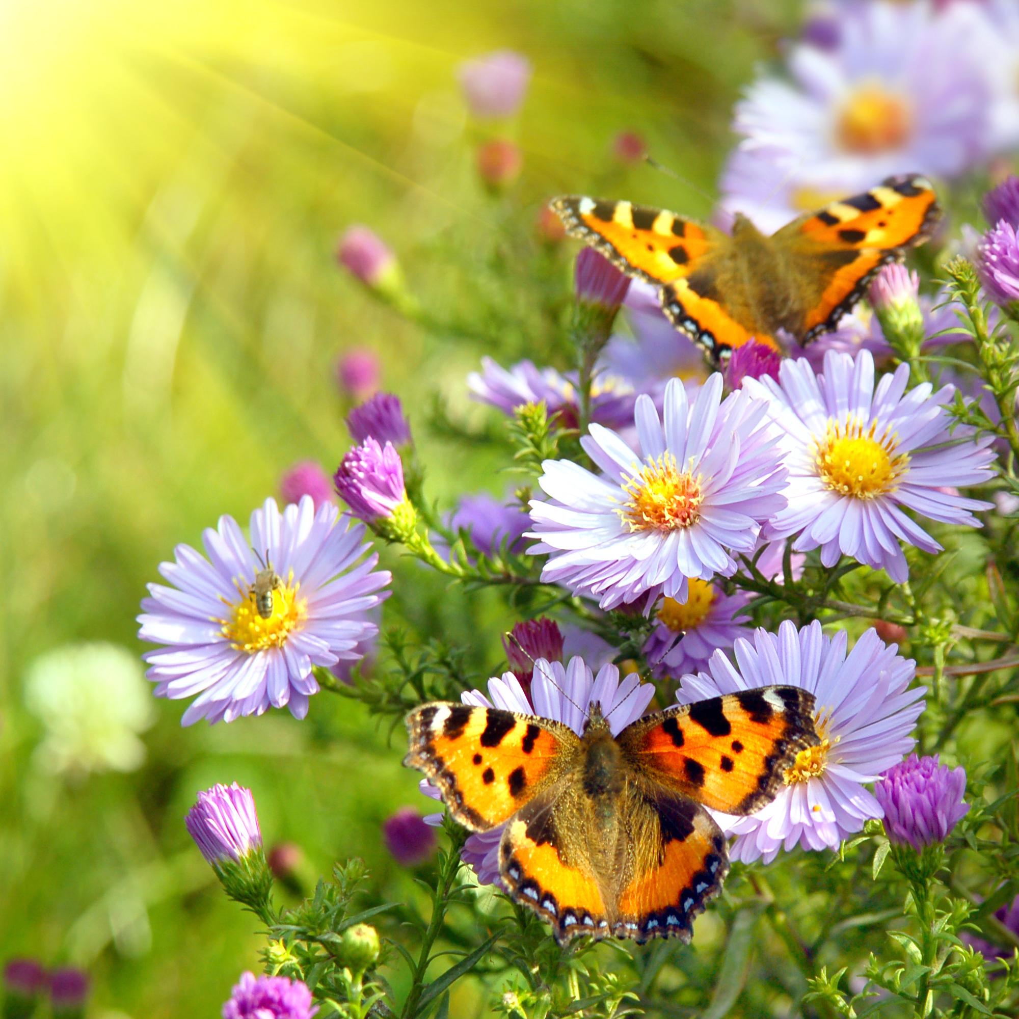 587278276-spring-butterflies-wallpaper (1).jpg
