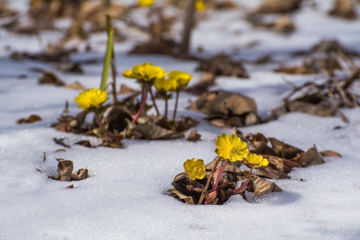 отношении картинка проталин весной имеет