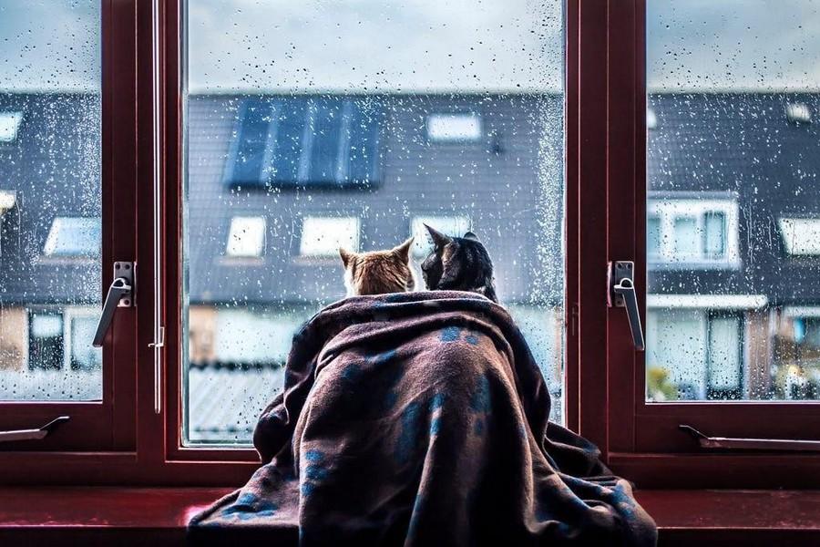 Дождливые картинки с добрым утром