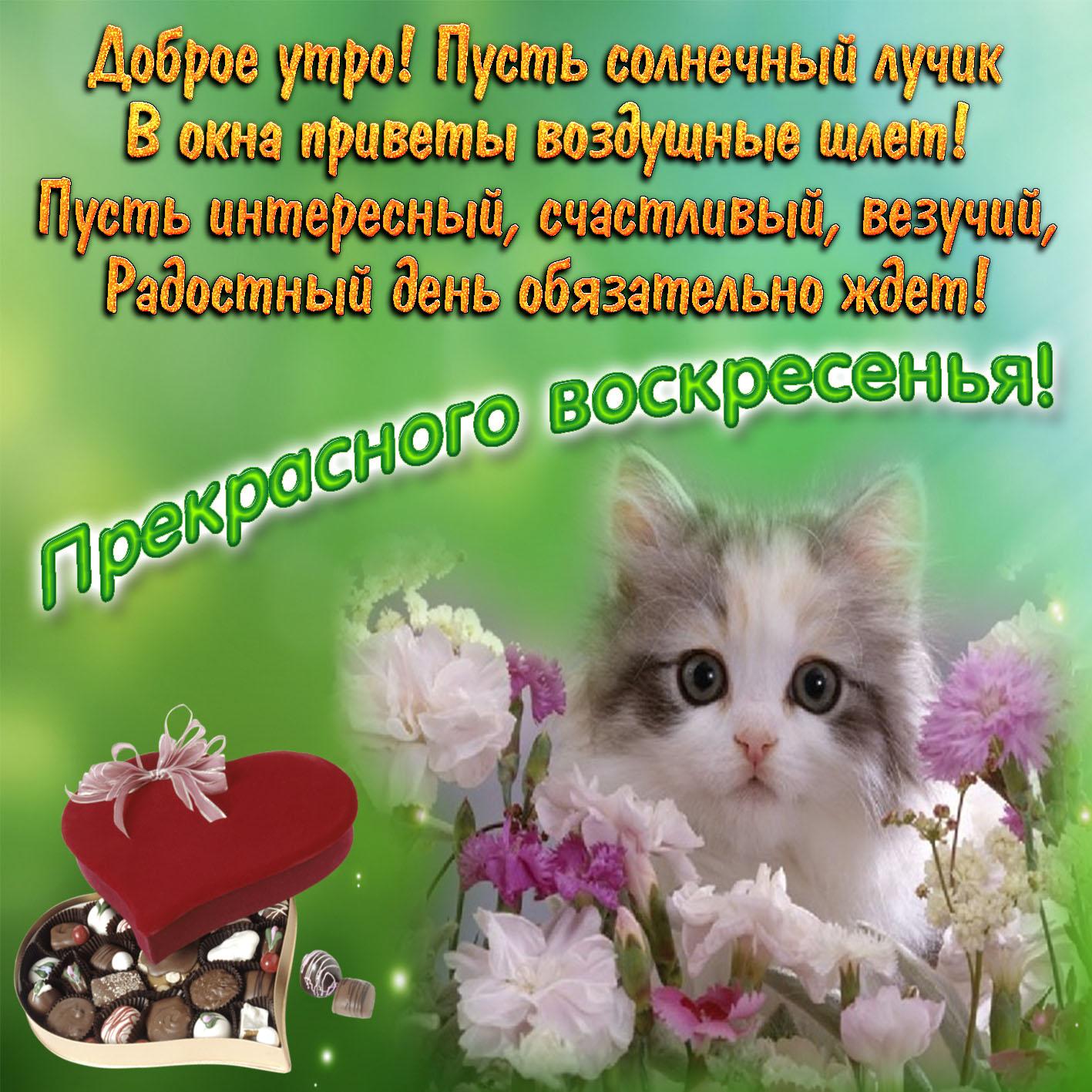 Гифки с пожеланием хорошего дня и отличного настроения в воскресный день