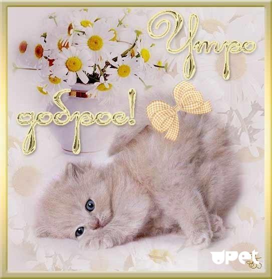 Днем рождения, доброе утро картинки с котиком