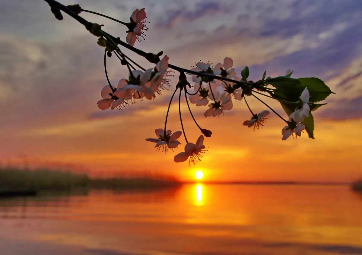 Фото природы добрый вечер