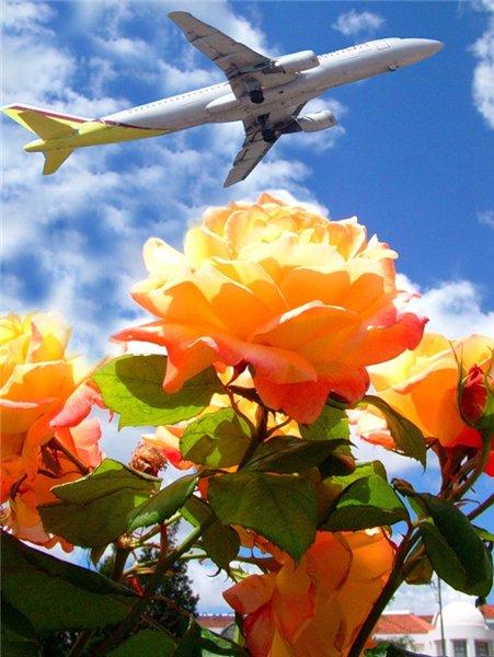 Хаха, открытки самолет и цветы