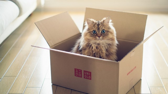 Animals_Cats_Fluffy_cat_in_a_cardboard_box_105532.jpg