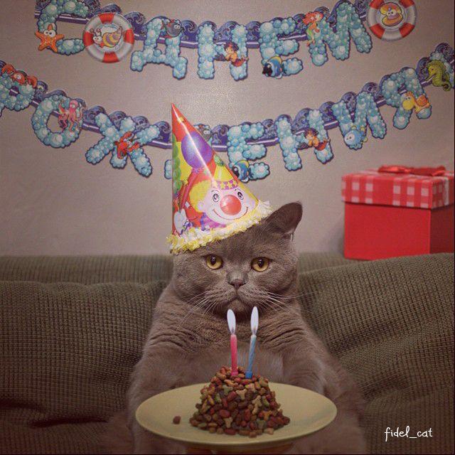 Смешные картинки с котами на день рождения