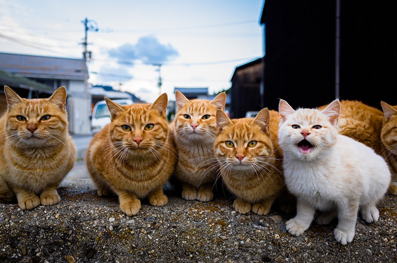 Cats_Ginger_color_518502_1280x848.jpg