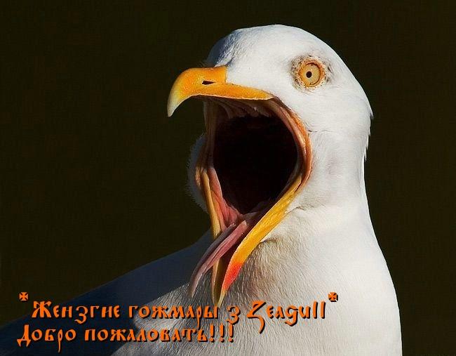 Чайка кошмары.jpg