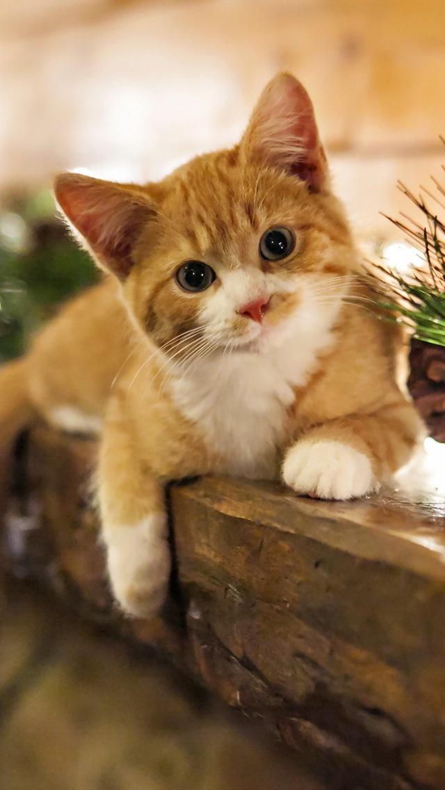 Cute-kitten-at-home-holidays_640x1136_iPhone_5_wallpaper.jpg