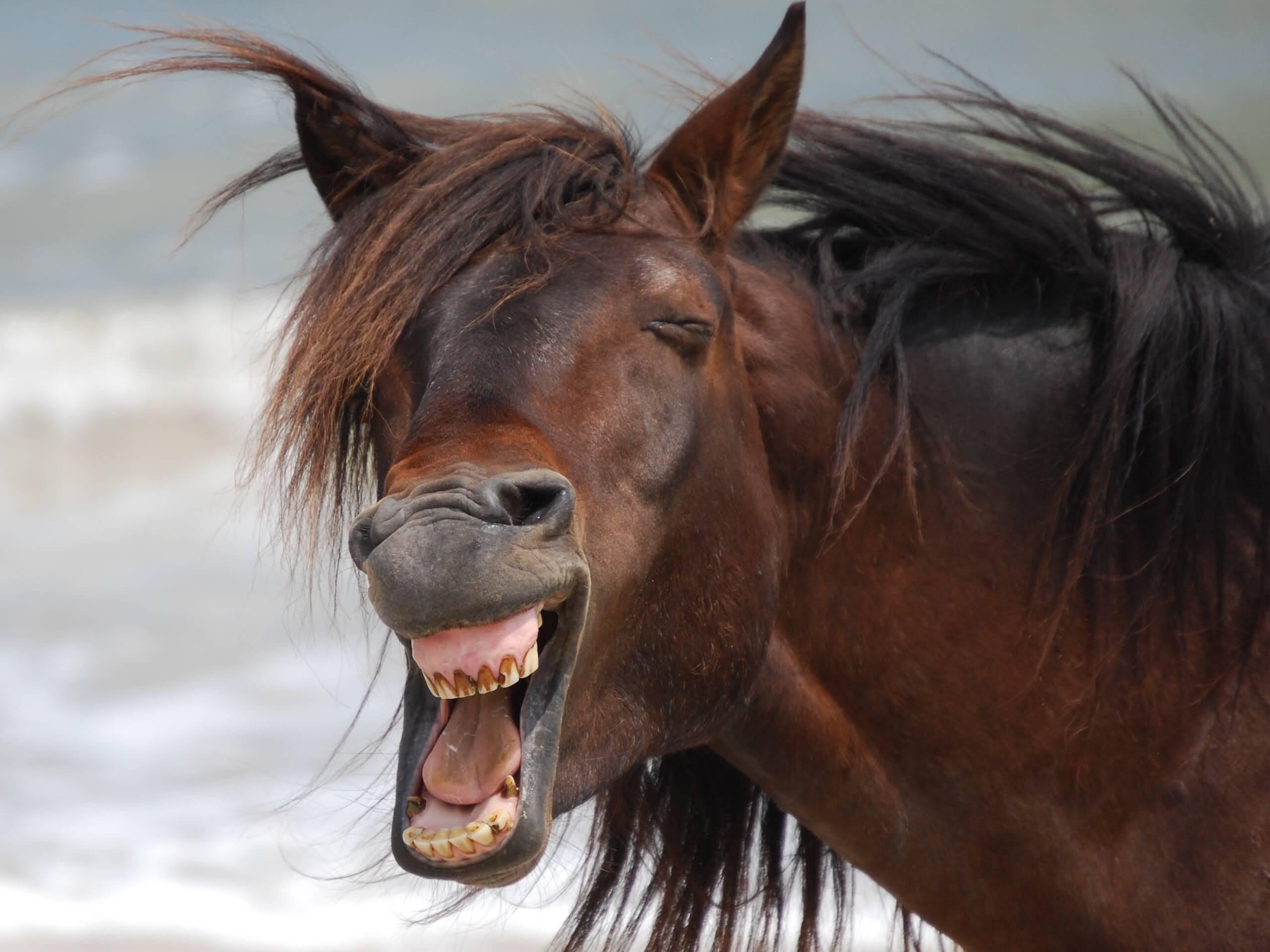 Прикольные картинки про коня