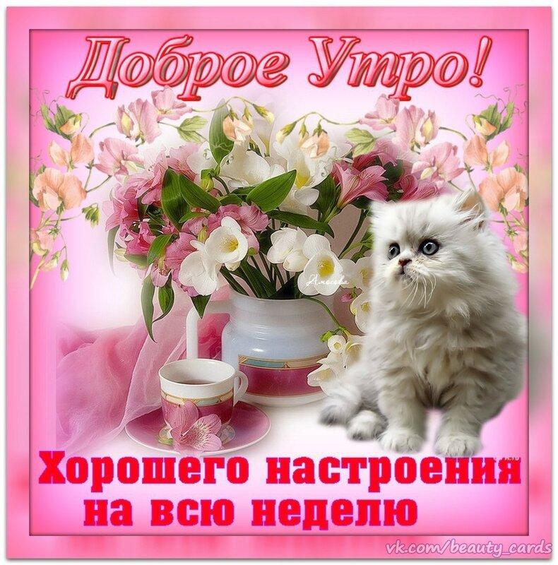 dobroe_utro_kot_076.jpg