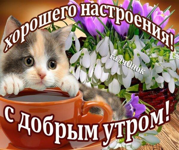 Картинки, картинки с котенком с добрым утром