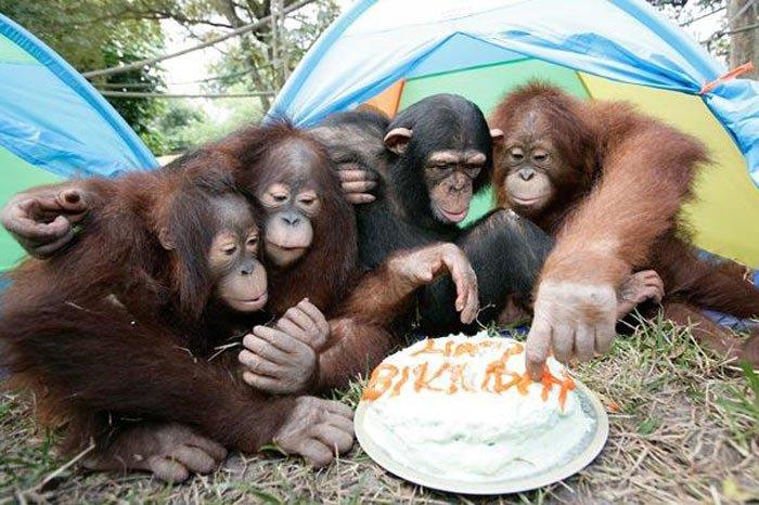 Днем геолога, открытка с обезьяной фото