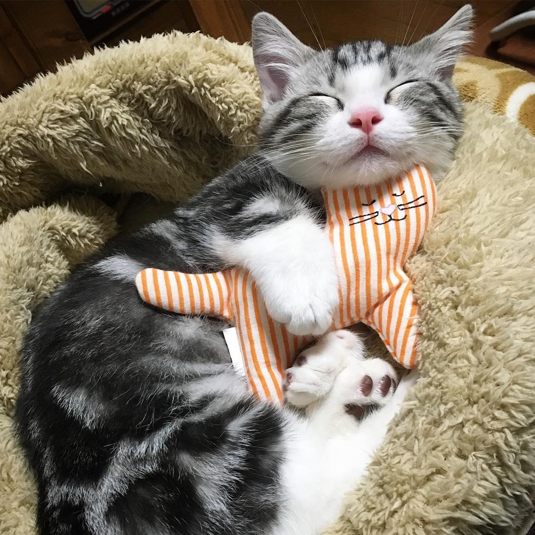 Картинки спокойной ночи кошка, рисунки