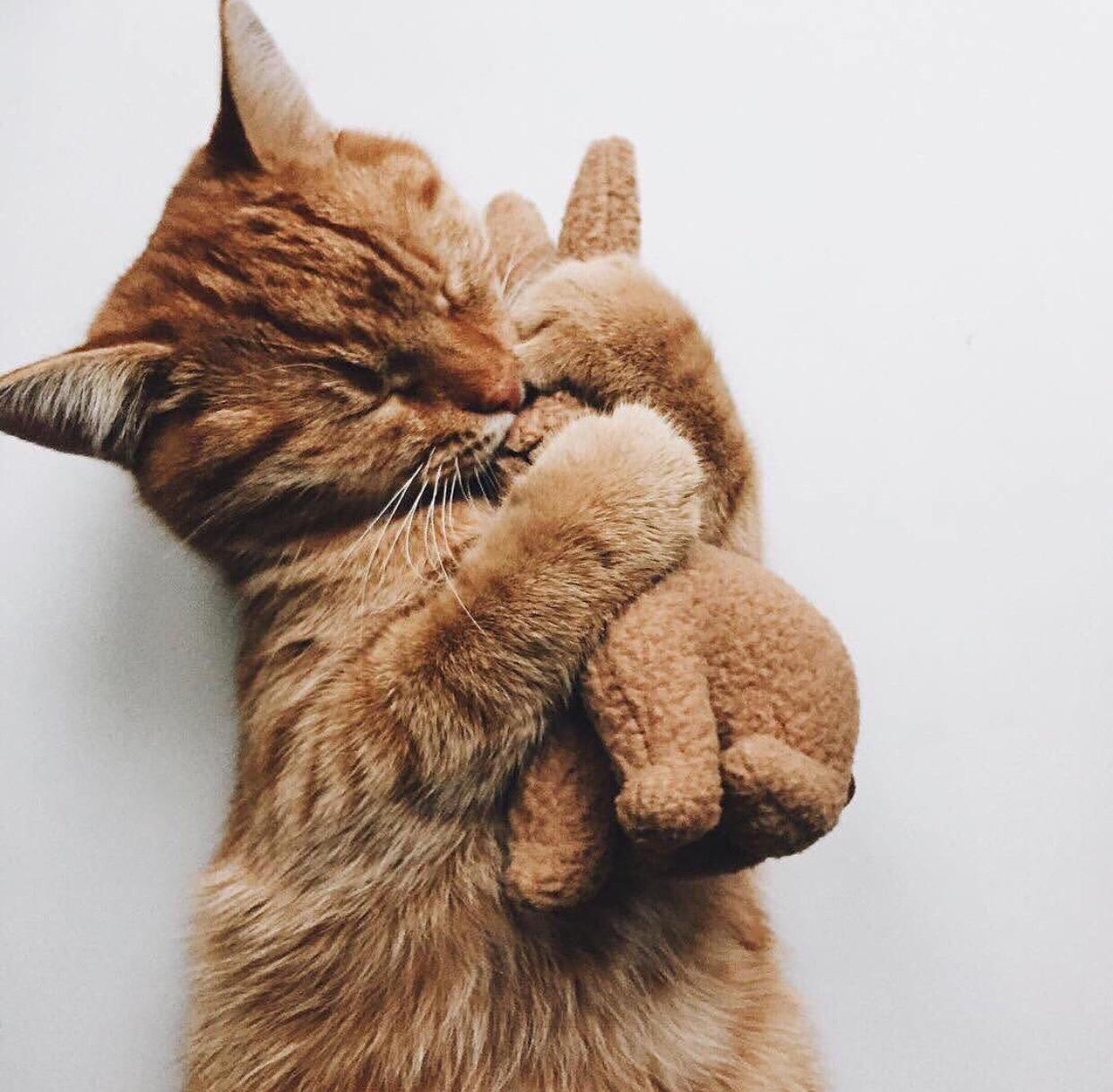 обнял кошку картинки результат дает комбинация