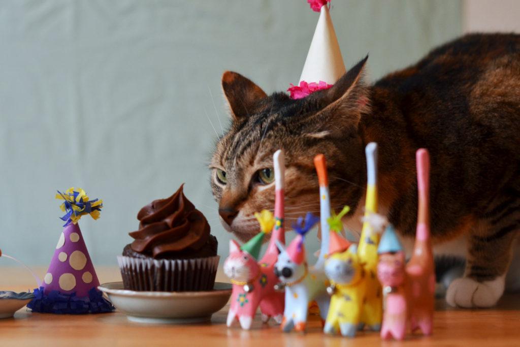 Фото котик день рождения