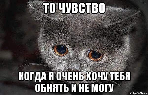 grustnyy-kot_90193252_orig_.jpg
