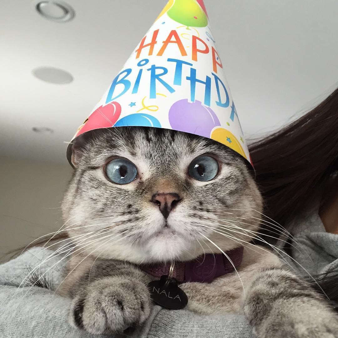 поздравления для кошки героине