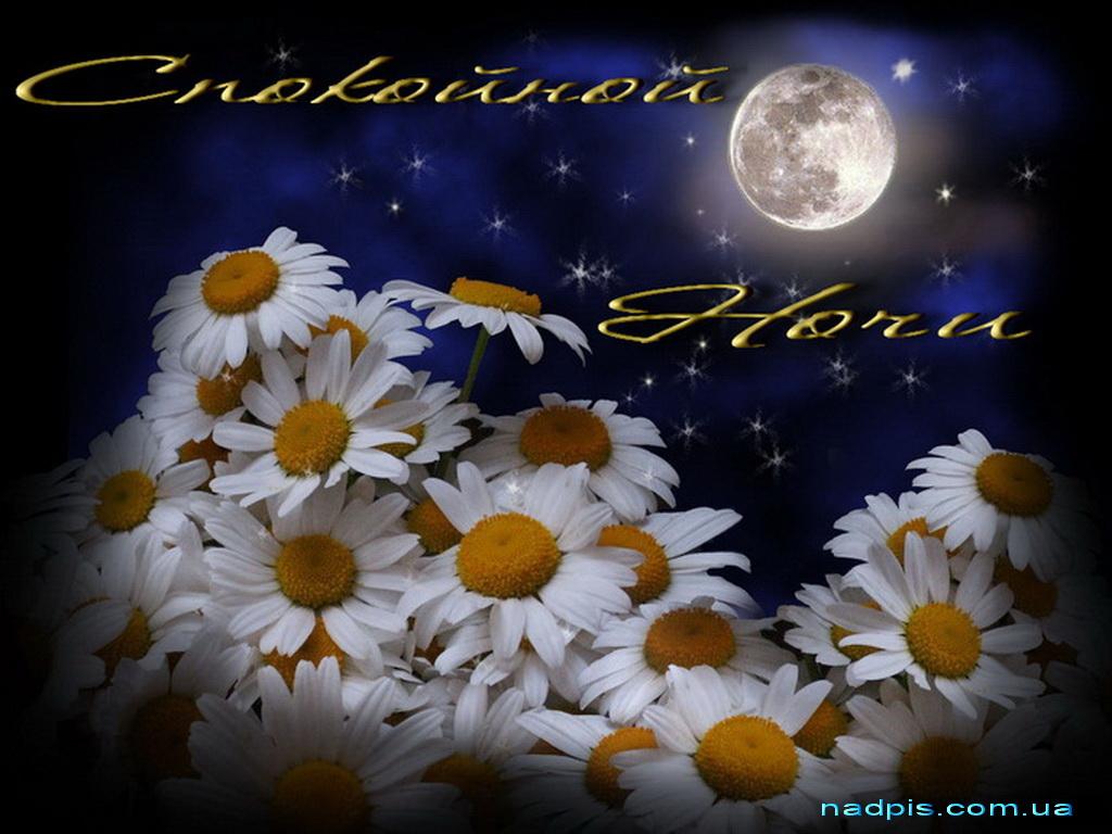 Картинки сладких снов с ромашками
