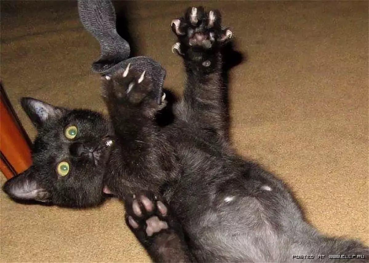 славянскому картинки вот так обниму тебя кошки также