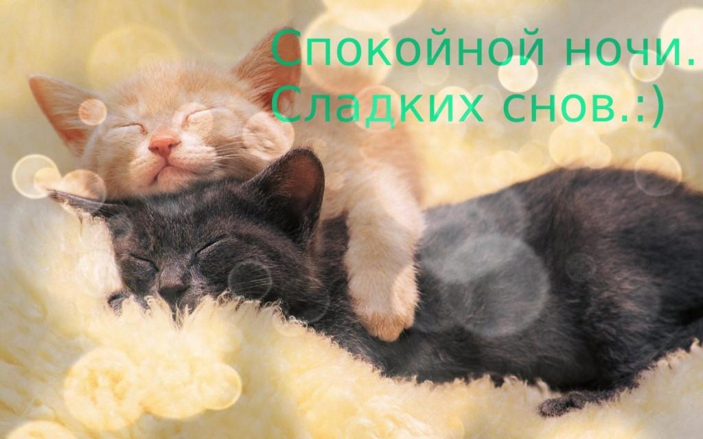 Картинки для мужчины спокойной ночи мой сладкий любимый котеночек, победе войне