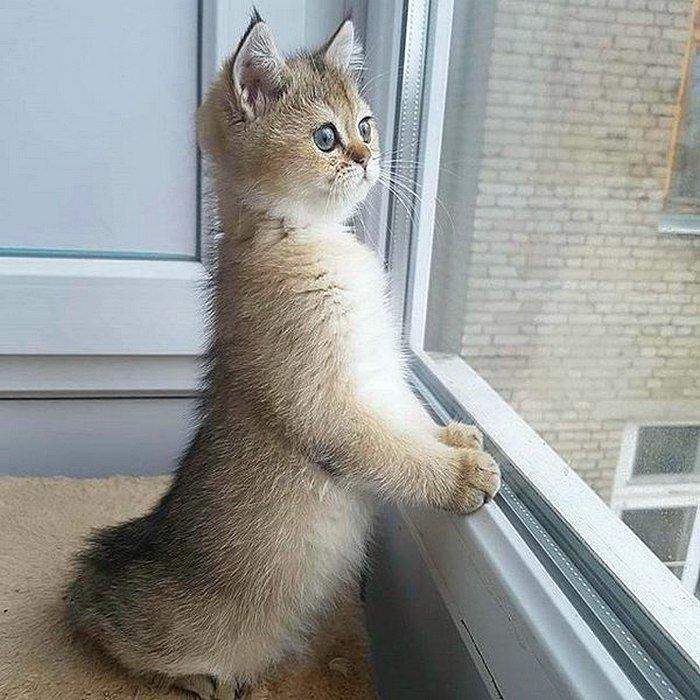 картинки я жду тебя кошки название
