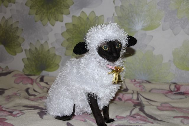 К году козКостюмы овцы к новому году