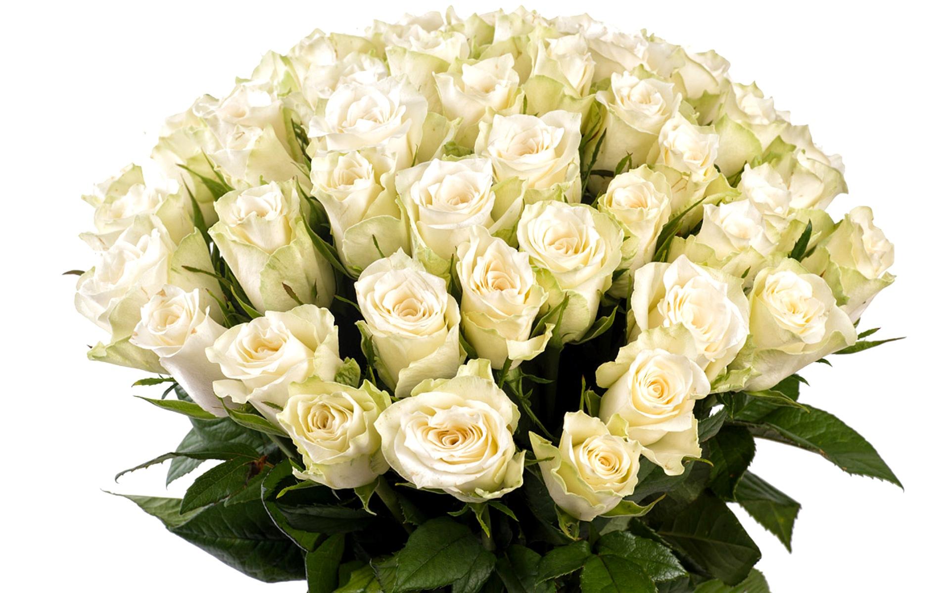 Картинки с белыми розами красивые, картинки про