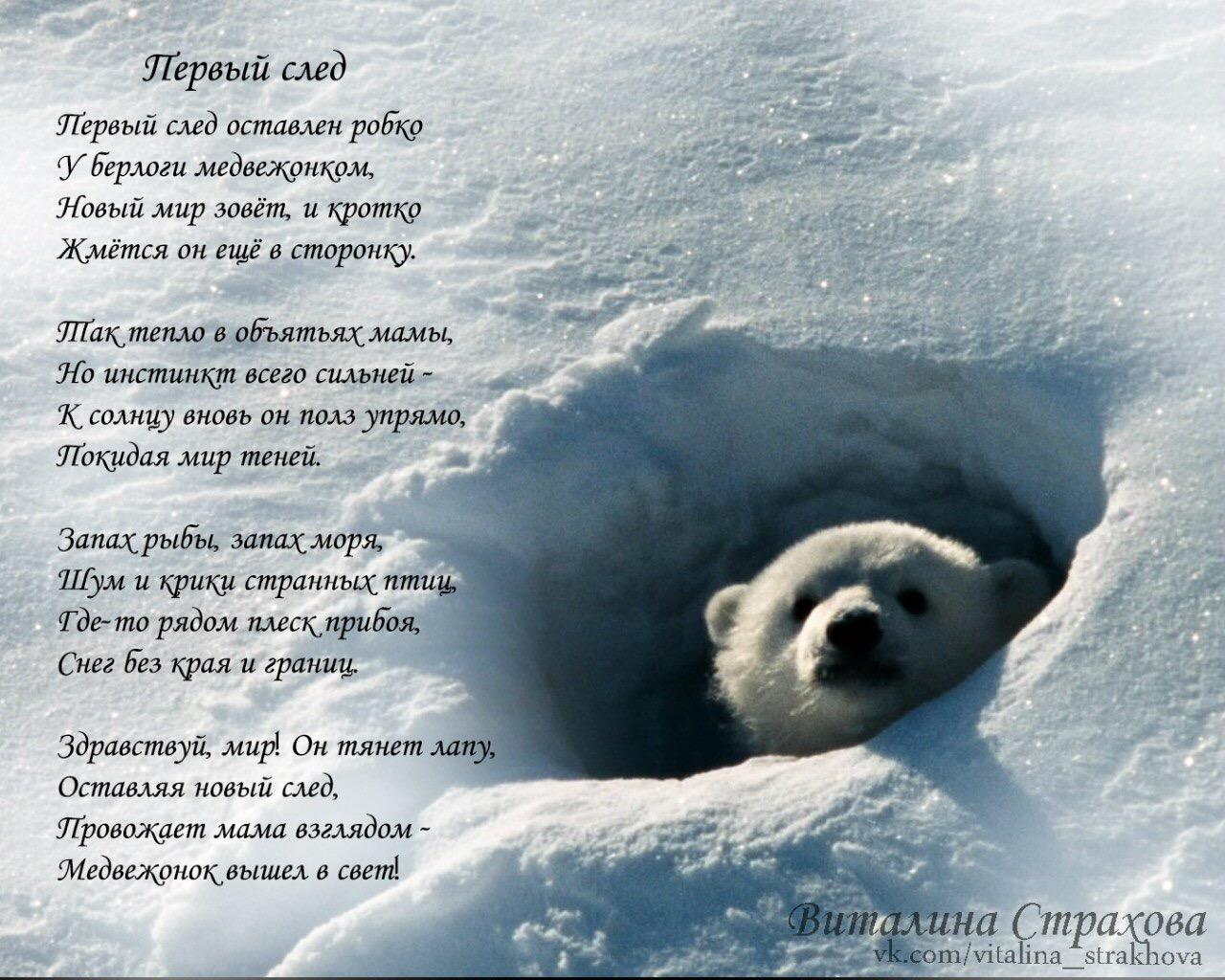 картинки с медвежатами и стихами демонстрируют причину наличия