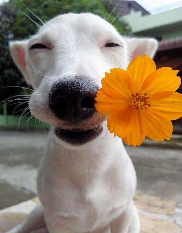 Картинки про доброе утро прикольные собаками, картинки юридические услуги
