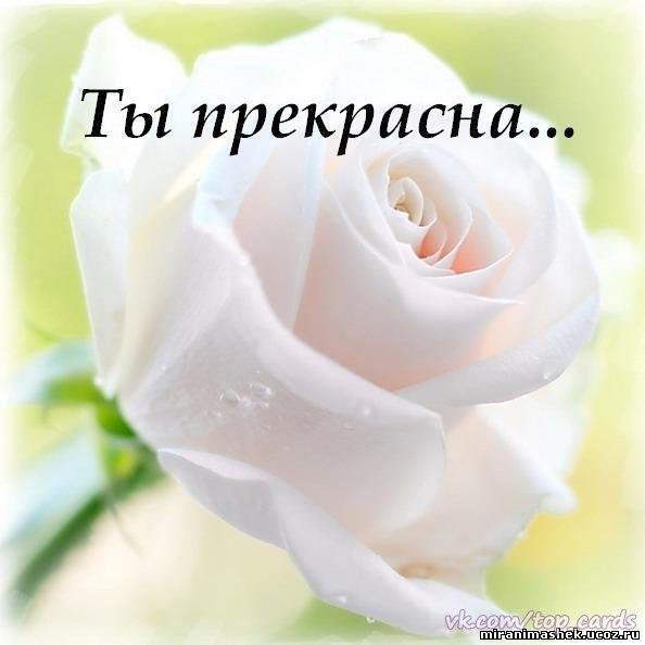 images_9602.jpg