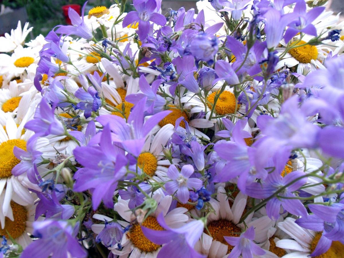 Картинки с днем рождения полевые цветы, днем рождения юлии