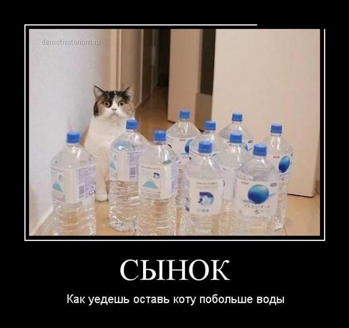 Кот в воде демотиваторы