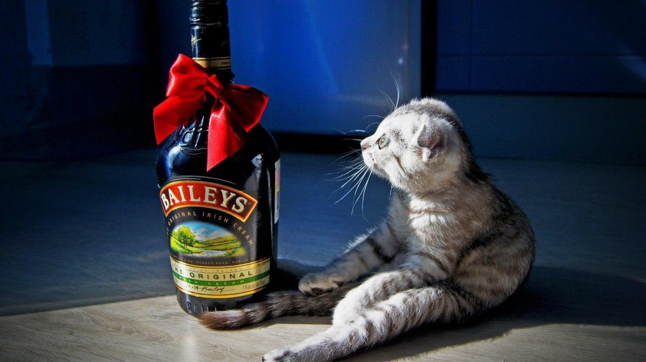 Ржачные картинки с бутылкой