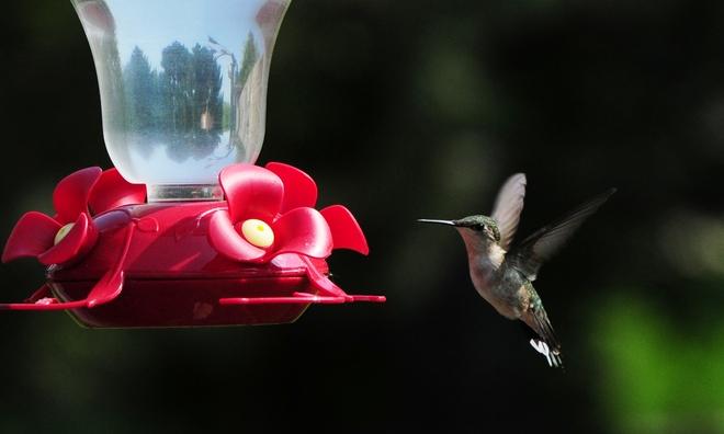 колибри --.jpg